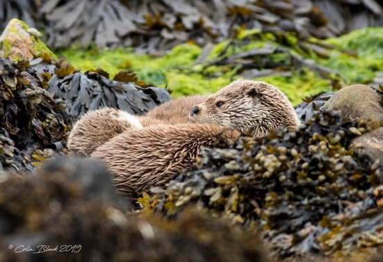 01 otters_148 copy